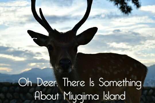 Oh Deer, There is Something About Miyajima Island