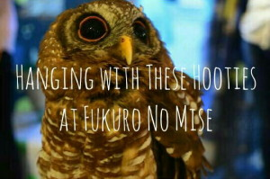 Read more about the article Hanging with These Hooties at Fukuro No Mise