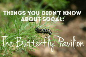 Read more about the article Thing you didn't know about SoCal: the Butterfly Pavilion