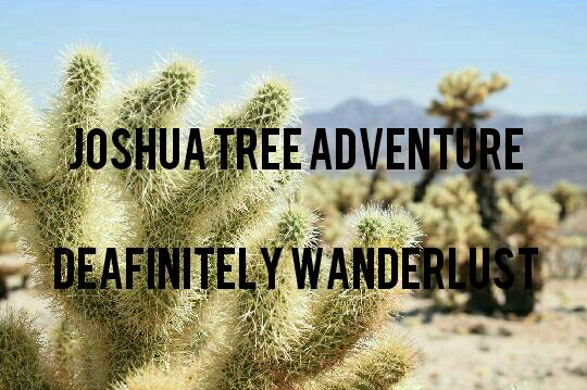 A Night to Remember: Joshua Tree
