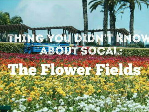 Read more about the article Thing You Didn't Know About SoCal: The Flower Fields