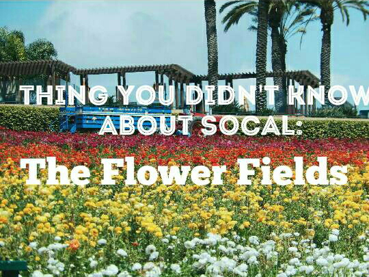 Thing You Didn't Know About SoCal: The Flower Fields