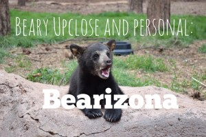 Read more about the article Beary Upclose and Personal: Bearizona